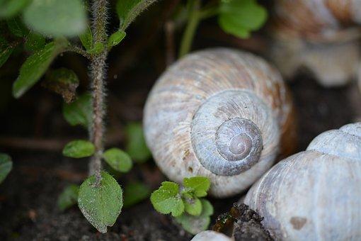 Snail, Shell, Mollusk, Nature, Schnecknehaus, Macro