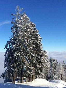 Winter, Mountain, Steibis, Snow