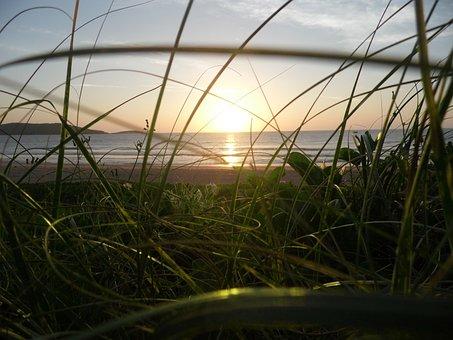 Vegetation On The Beach, Beach Of The Hill, Sunrise
