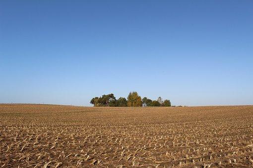 Cornfield, Harvest, Autumn, Forest, Waldoase