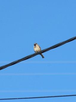 Sparrow, Cable, Wiring, Bird, Blue Sky