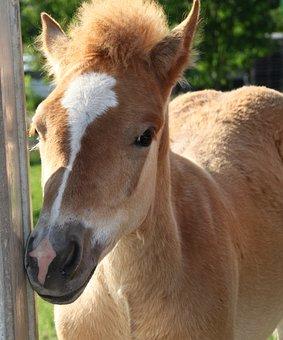 Foal, Horse, Eye, Brown, Beautiful, Animal, Meadow