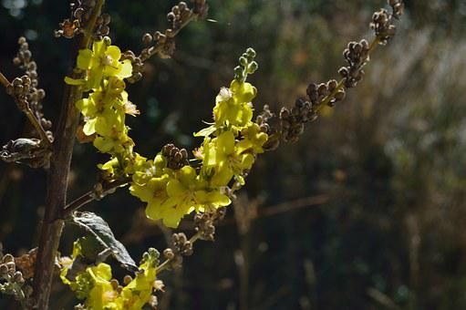 Plant, Phytotherapy, Garden, Plant Yellow