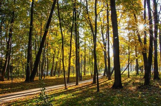 Park, Autumn, Ostankino