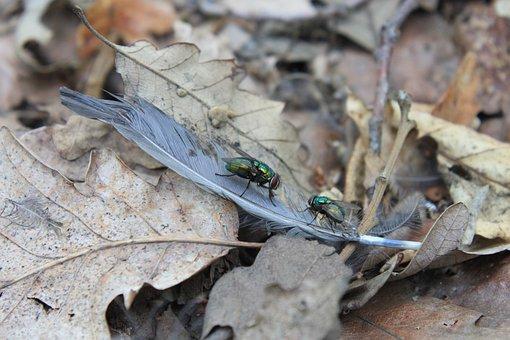 Bird, Feathers, Fly, Golden, Green, Lucilia, Phaenicia