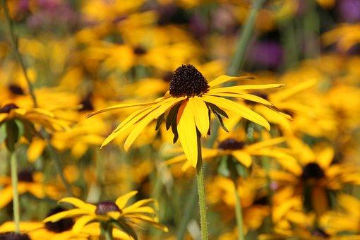 Flowers, Yellow, Yellow Flower, Field, Sunday Flowers