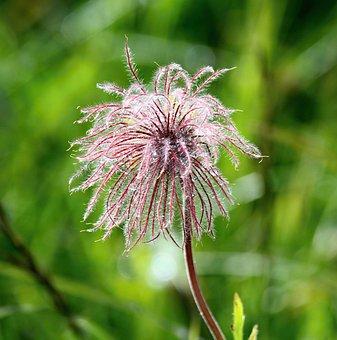 Flower, Pink, Macro, Green, Summer, Mountain, Alpine