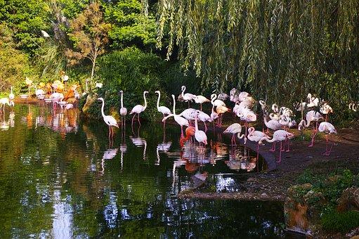Zoo, Flemish Roze, Animals