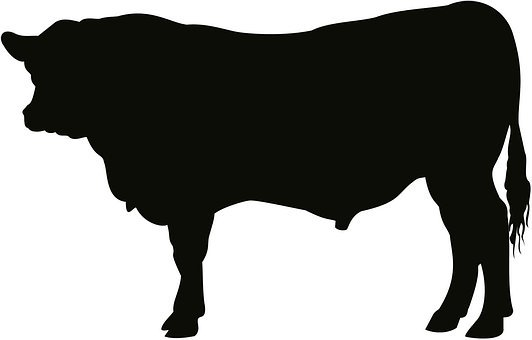 Angus, Bull, Cattle, Cow, Art, Artwork, Silhouette