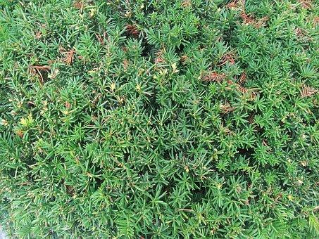 Shrub, Moss, Green, Forest, Garden, Natural, Bush