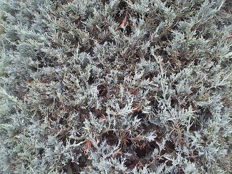 Shrub, Moss, Plant, Green, Forest, Garden, Natural