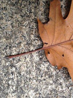 Leaf, Fall, Autumn, Brown, Leaves, Granite, Rock