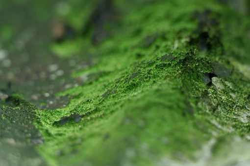 Moss, Green, Forest Floor, Nature, Forest, Natural