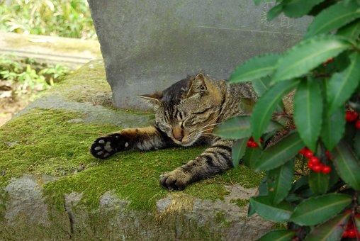 Cat, Sleep, Kawagoe, Garden