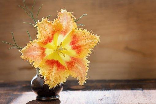Tulip, Flower, Blossom, Bloom, Yellow, Red, Orange