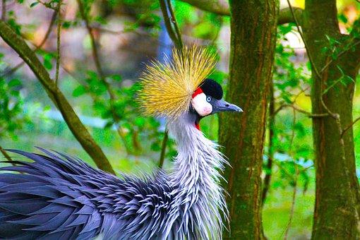 Peacock, Dresden, Zoo, Animal Portrait