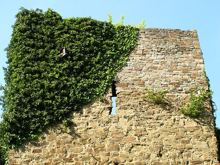 Castle Wall, City Blankenberg, Ivy, Historically