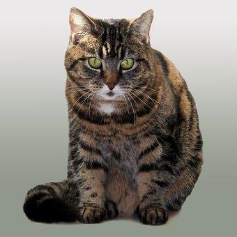 Cat, Pets, Livestock, Model, Expensive