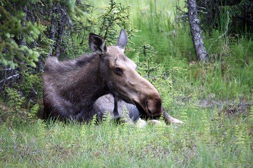 Moose, Alaska, Homer