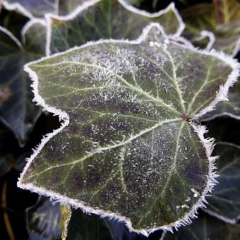 Leaf, Hoarfrost, Frozen, Nature, Cold, Autumn, Winter