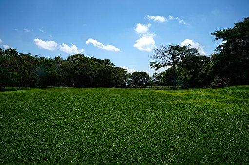 Grass, Landscape, Trees, Archeology, Maya, Pipil, Park