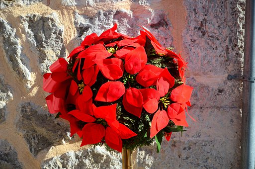 Arrangement, Blumenstock, Mallorca, Sun, Spring, Red