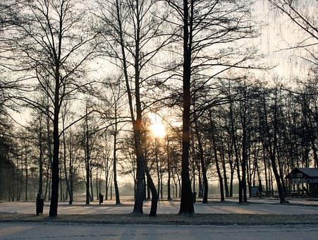 Trees, Winter, In The Morning, Sunrise, Park, Nature