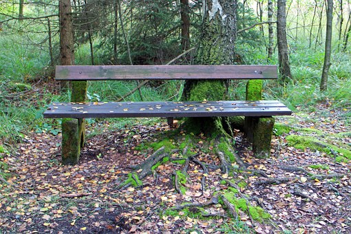 Bank, Wooden Bench, Seat, Nature, Forest, Out, Rest