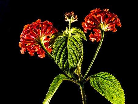 Small Wiildblume, Wild Plant, Flower, Blossom, Bloom