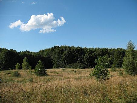 Landscape, Kampinos, National, Park