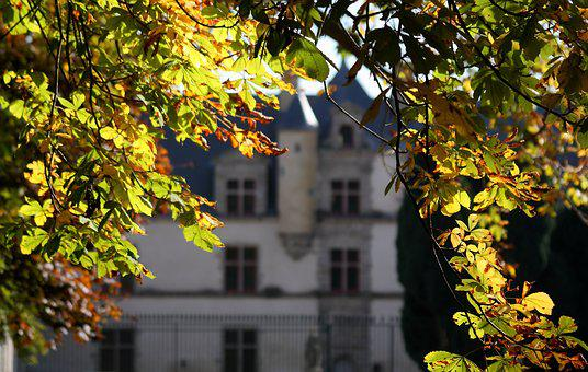 Fall, Boitissandeau, The Herbaria