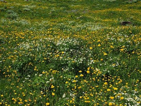 Flower Meadow, Alphabet, Flowers, Bloom, Yellow, White