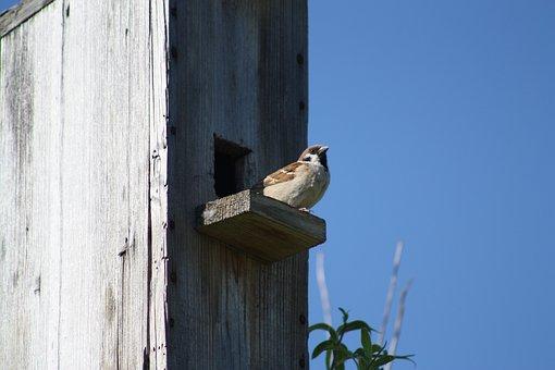 Spring, Nature, Birdhouse, Sparrow, Bird, Against Sky
