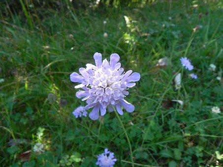 Grassland Plants, Macro, Blossom, Bloom, Flower, Plant