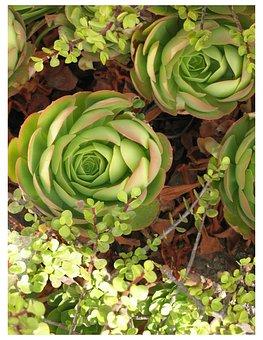 Wildflower, Flower, Succulent, Nature, Garden, Floral
