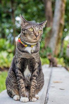 Cat, Cat Thailand, Parks, Small Indian Civet
