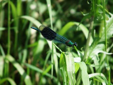 Dragonfly, Insect, Summer, Shiny, Wing, Transparent