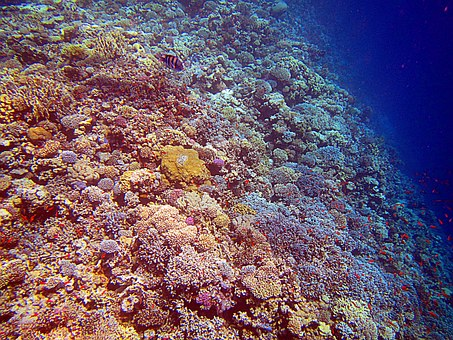 Coral, Red Sea, Egypt, Coral Reef, Colorful, Diving