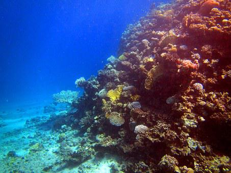 Red Sea, Coral, Fish, Egypt, Diving, Underwater