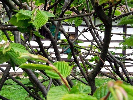 Nature, Impression, Leaves, Green, Hedge, Plant, Spring