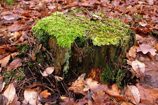 Próchniejący Stock, Moss, Tree