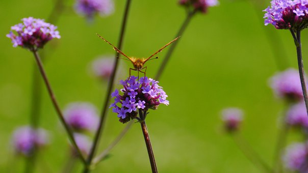 Butterfly, Before You Start, Flower, Nature