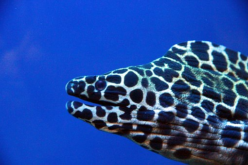 Moray, Aquarium, Blue Background, Undersea World, Fish