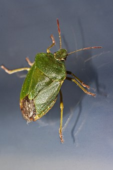 Bug, Green, Insect, Macro, Close, Gloss, Probe, Blue