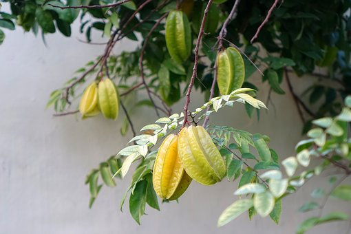 Star Fruit, Carambola, Summer Fruit, Exotic, Gross