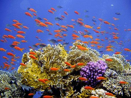 Diving, Underwater, Reef, Coral, Banners Harsh