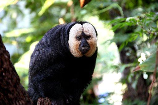Monkey, Zoo, Animal, Animal World, Nature