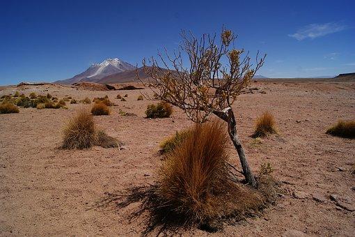 Desert, Bolivia, Landscape, Backpacker, Salar, Trip