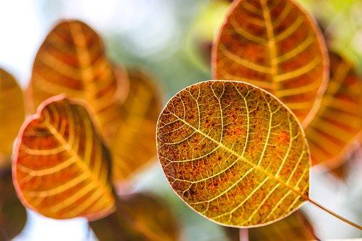 Autumn Leaves, Autumn, Autumn Lights, Discolored Leaves