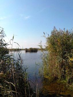 Lake, Side Arm, Reed, Nature, Grass, Water, Bank